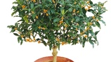 家有空地可別荒廢,客廳一定要種這7盆植物,瘋狂開花又淨化空氣