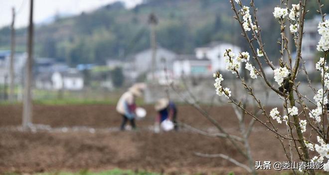 春天不僅播種,也有收穫