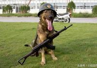 最完整的德國牧羊犬訓練方法