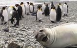 攝影 | 90個有趣的動物照片炸彈