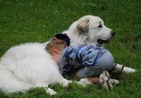 被大白熊給暖到了,被小羊亂踩都毫無怨言,眼神還是那麼溫柔!