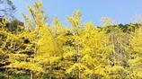 廣東唯一的秋色就藏在這裡,宛如夢幻般的南疆