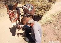 為什麼農村80歲的老人還要下地幹活?