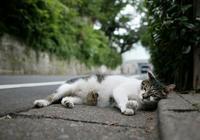 流浪貓被領養後知道自己有個家了嗎?它們會是什麼心理?