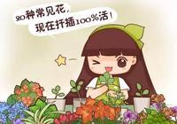 虎尾蘭豆瓣綠現在扦插,生根快又壯,成活率倍兒高!