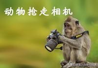 被動物搶走相機的攝影師不僅不恨它,還拍出這麼有愛的照片!
