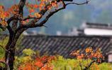 又到了去塔川古村落看秋色的時候了,隨手一拍都是好照片,景色美