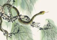 蛇蛇人的後50年:特別強調(65年)的,你身邊有蛇蛇嗎?
