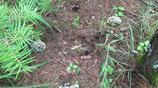 昆明賣一千多一公斤的極品野生菌,被我和媳婦在山上找到了!
