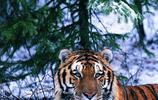 攝影圖集:跟著攝影師一起走進動物世界,看它們的生活