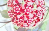 美麗的花兒惹人醉,來欣賞和認識這些美麗的花吧