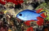 萌寵:五彩繽紛的熱帶魚
