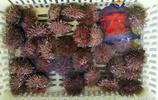 10塊錢買紅頭魚全家吃不了 海鮮市場也能淘到價廉物美海鮮