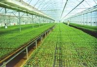 彩色農業、知識農業、外向型農業等你來把脈多種新型農業