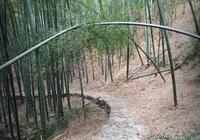 四明山最有意義的徒步道,讓你愛上徒步旅行!
