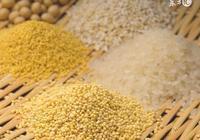 高新科技!小麥育種的革命——矮敗小麥