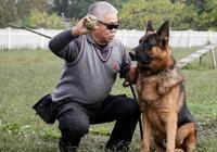 """狗狗品種不好是個偽命題——40年養犬專家這些招數,讓你狗狗變成""""文明種"""""""