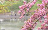 春天,不是隻有櫻花油菜花,這種花也很美