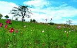 木蘭草原之旅,大野芳菲之景