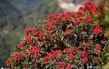 中國最好玩的一座山:春可賞花,夏可避暑,秋可登高,冬可賞雪