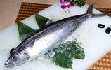 動物圖集:馬鮫魚