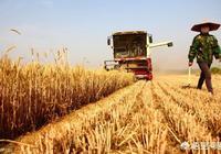 馬上收割小麥了,你覺得農民有沒有必要和收割機討價還價,為什麼?