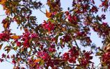 吉林市松花江畔盛開的花樹叫什麼名字,你知道嗎?