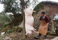 民間故事:殺豬的理由