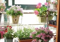 陽臺環境對花卉有何影響?