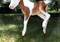 養只萌萌的寵物馬