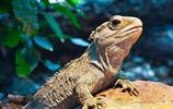 顛覆你想象的世界長壽動物。烏龜並非第一,有的居然能夠永生!