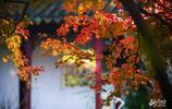 上海這座古園秋色唯美,每年一到這時候就成了老法師們的攝影天堂