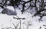 """大自然中神奇的""""偽裝者"""",你能發現這7張照片中的動物嗎?"""