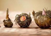 魔性的食物——魔芋