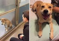 6張狗狗被領養前後的對比照,得到愛的它們樣子完全不同了!