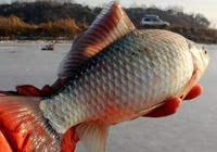 冬天的魚兒喜歡在這些地方過冬,只要找到爆護不難!