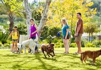 帶狗狗去公園社交的注意事項,不考慮這5個問題,會破壞它的娛樂