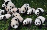 大熊貓故鄉
