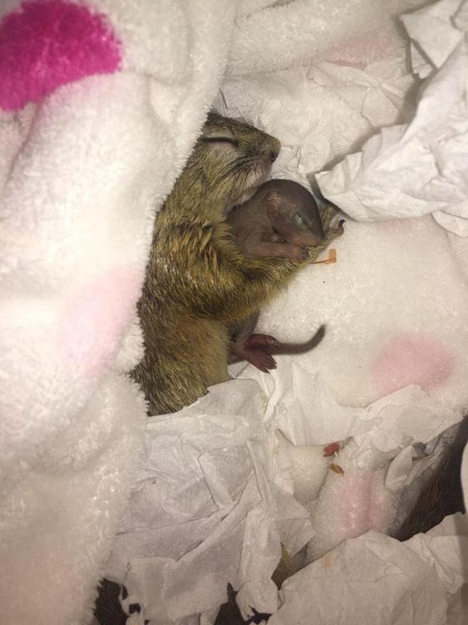 她兩年前救的那隻松鼠,這次終於成功生下了小松鼠!