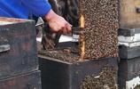 別再上當了,這幾種蜂蜜根本不存在,金銀花、玫瑰、銀杏都中槍!