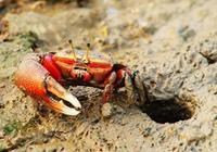 荀子不懂科學,讓螃蟹受不白之冤