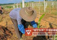 隆安又一項甜蜜事業讓農民笑開顏