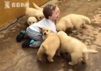 """場面快控制不住了!小男孩被一群小奶狗""""圍攻"""""""