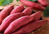 種紅薯有什麼好技術能提高產量,而且種出來的個頭大呢?
