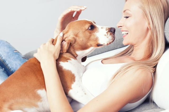 迴歸基礎知識,關於狗狗洗澡的那些事,自己動手洗狗每月省好幾百
