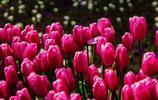 旅遊圖集:走進德國,去看荷蘭庫肯霍夫花園