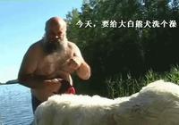 大白熊犬不想洗澡,主人硬拉,自己摔了個四腳朝天