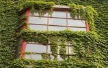 婆婆在陽臺上種了幾株爬藤花卉,到了明年春天成了小花園