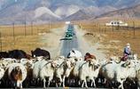 祁連山草原 風吹草低見牛羊