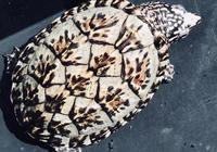 什麼烏龜最好養?